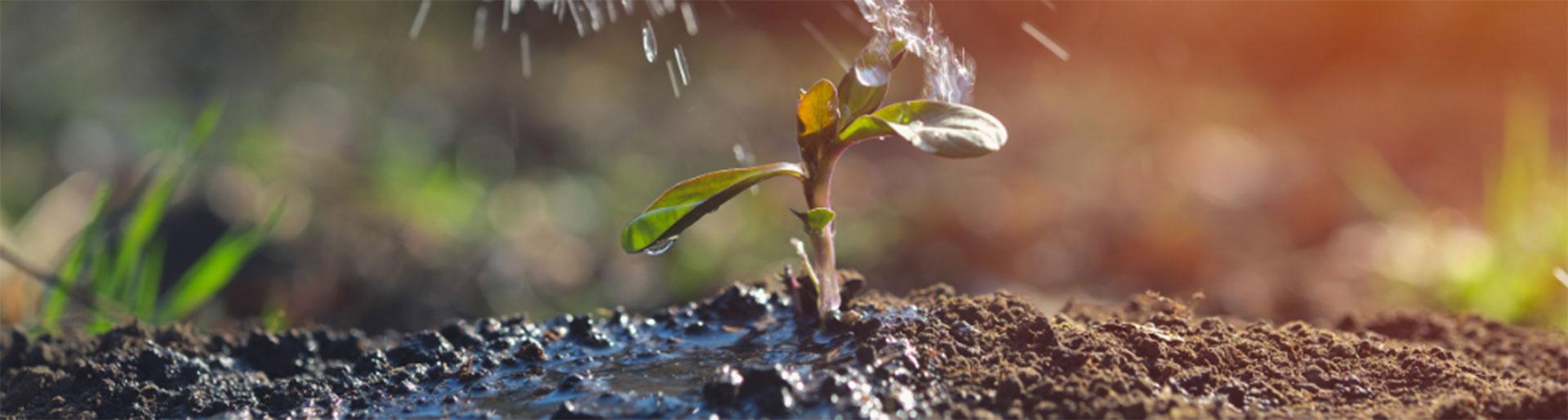 BPA TAP - Petite plante arrosée