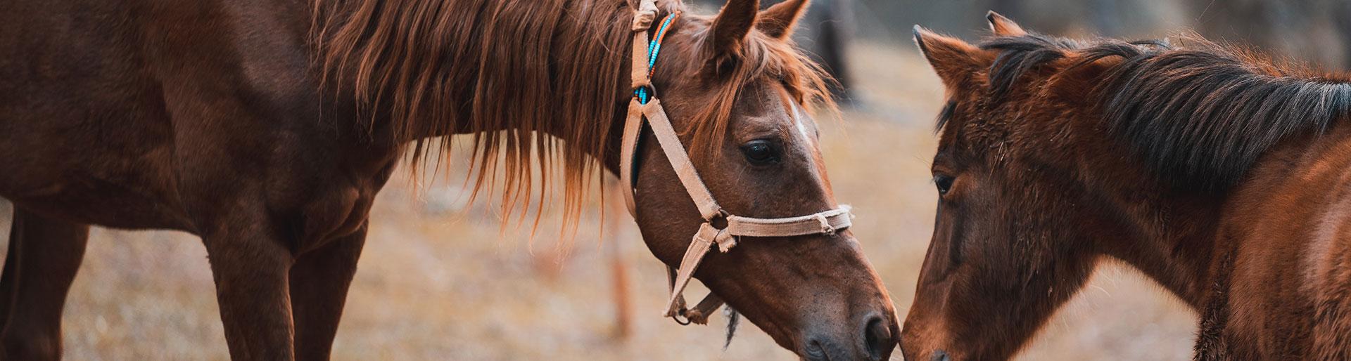 BP JEPS ESAE - Duo de chevaux