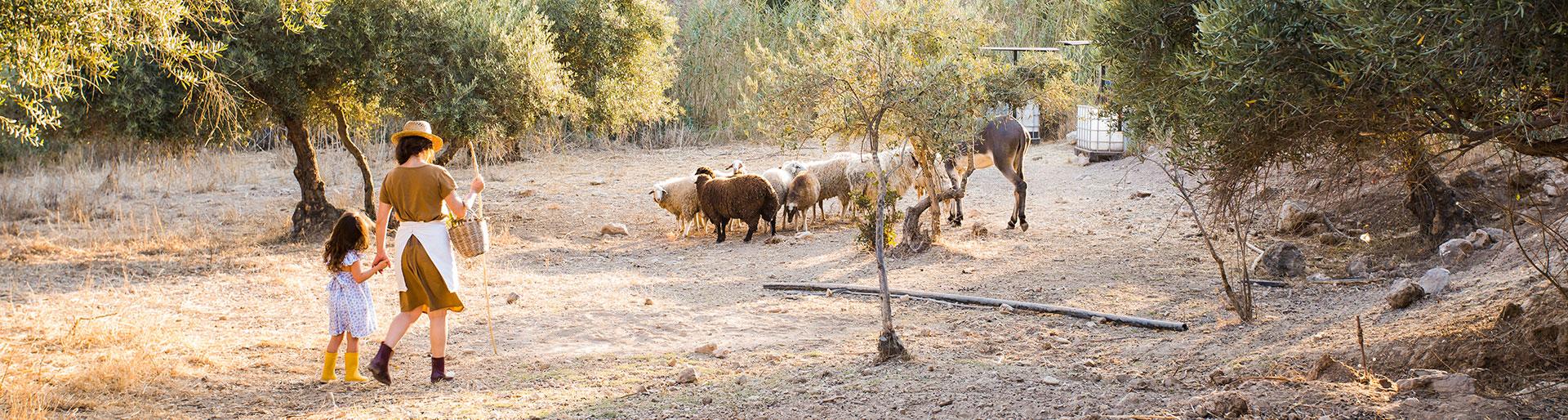 CAPa MA - une femme et sa fille guidant le bétail