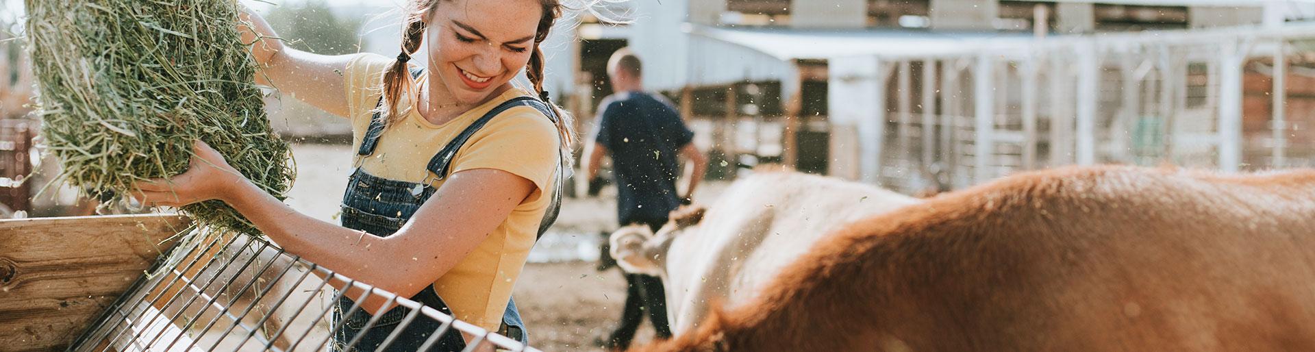 BTSa PA - couple de fermiers nourrissant des vaches