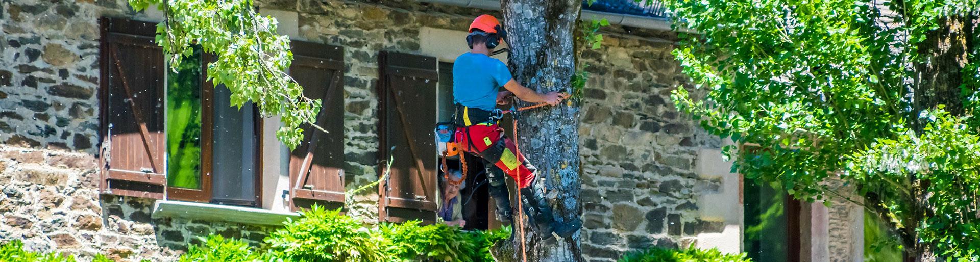 CS AE - Elagueur dans un arbre