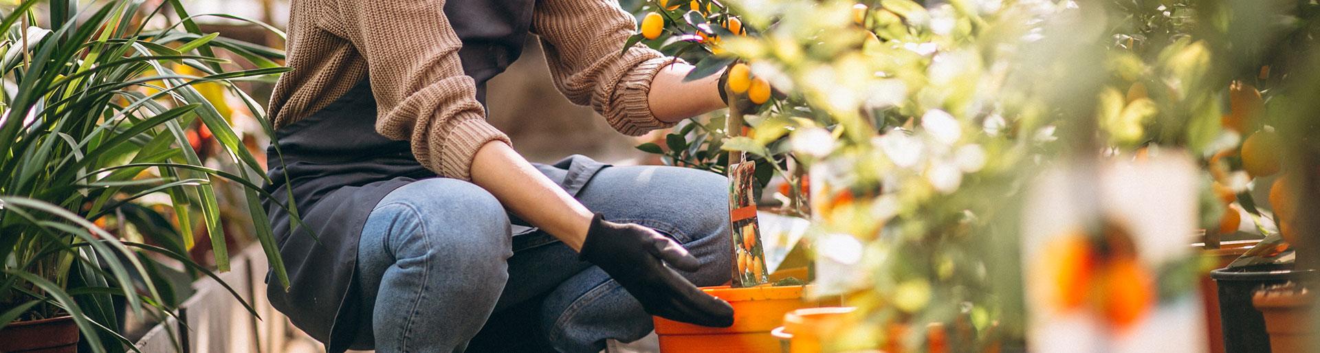 Bac Pro CPH - Une femme s'occupe de plantes en pot