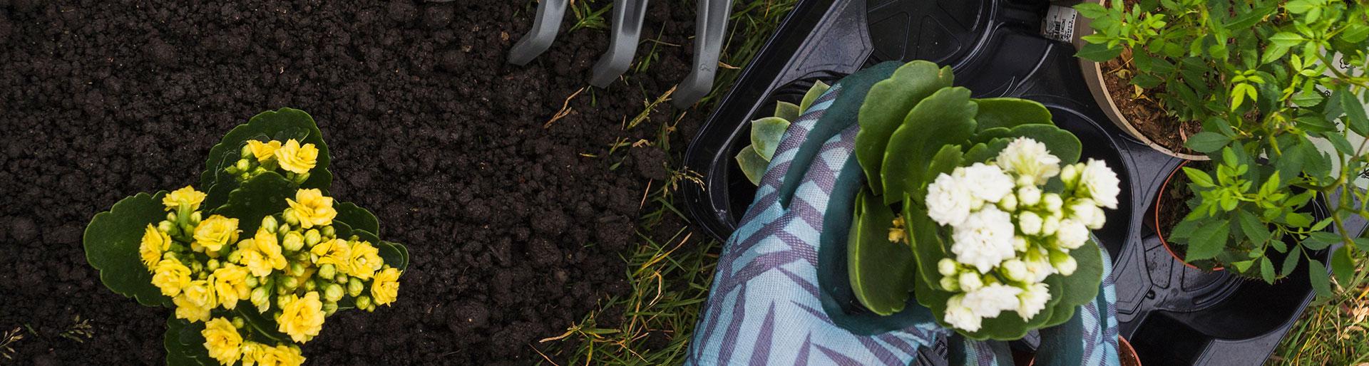CAPa JP - Jardinier plantant des fleurs