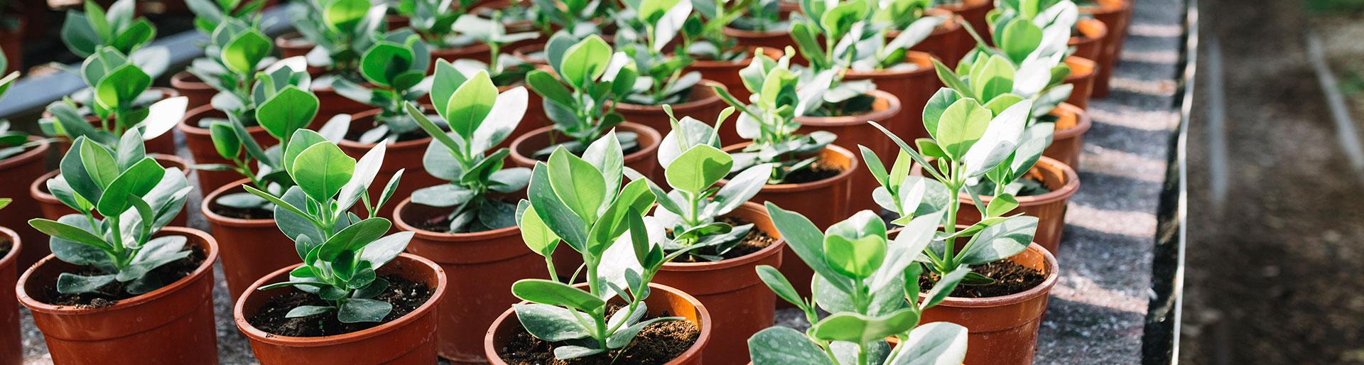 BTSa PH - Plantes en pot serre horticole